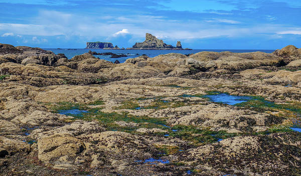 Photograph - Rocky Washington Coast Of The Pacific by Dan Sproul