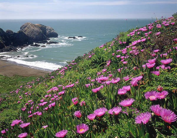 Photograph - 2a6149-rodeo Beach And Iceplant  by Ed  Cooper Photography