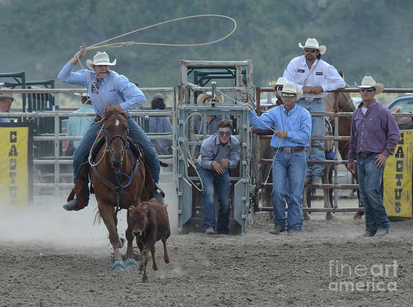 Wall Art - Photograph - Rodeo Calf Roping by Bob Christopher