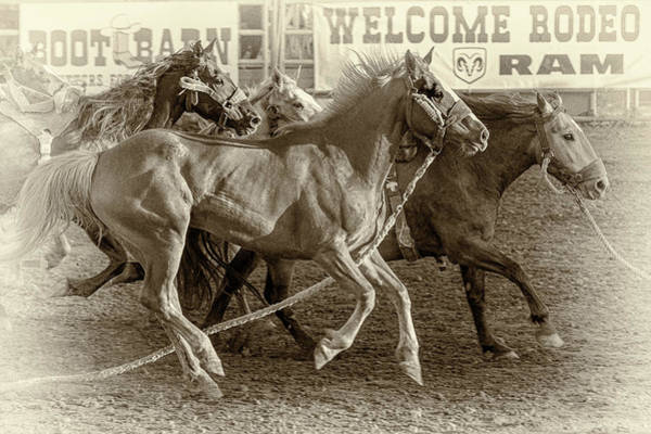 Pferd Photograph - Rodeo Horses - Antique Sepia by Caitlyn Grasso