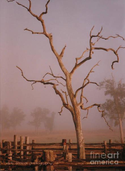 Photograph - Rodeo Mist by Vicki Ferrari