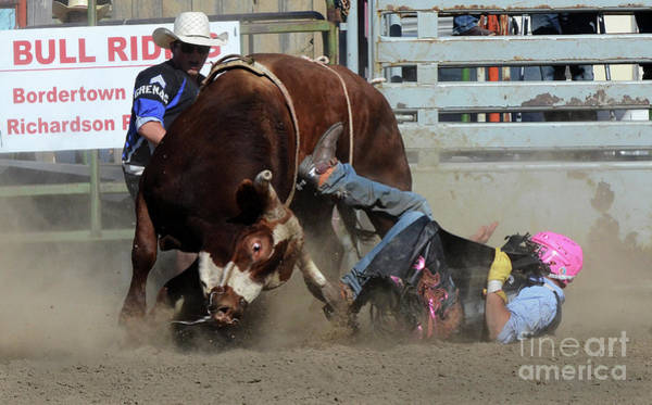 Lethbridge Photograph - Rodeo Stars 2 by Bob Christopher