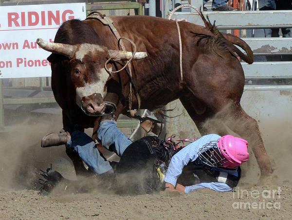 Lethbridge Photograph - Rodeo Stars 3 by Bob Christopher