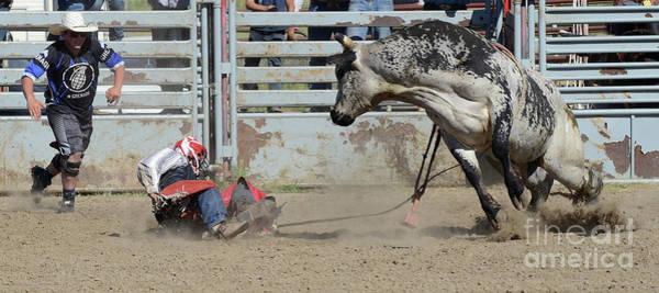 Lethbridge Photograph - Rodeo Stars 5 by Bob Christopher