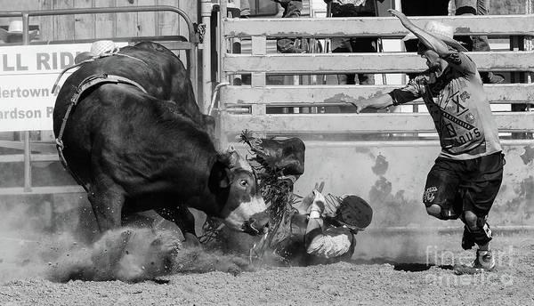 Lethbridge Photograph - Rodeo Stars 6 by Bob Christopher