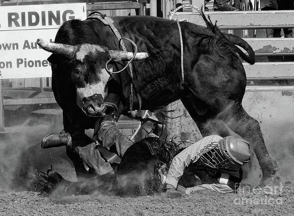 Lethbridge Photograph - Rodeo Stars 8 by Bob Christopher