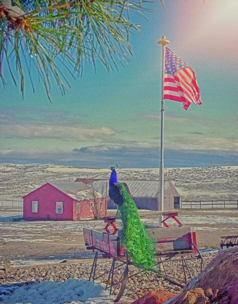 Photograph - Roger And The American Flag by Amanda Smith