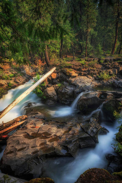 Wall Art - Photograph - Rogue River by Cat Connor
