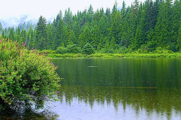 Photograph - Rolley Lake  In The Rain by Sharon Talson