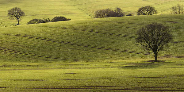 Nottinghamshire Photograph - Rolling Fields by Chris Dale