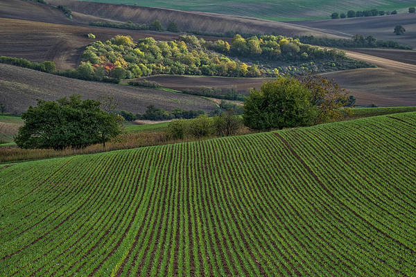 Photograph - Rolling Hills In Moravia #6 by Stuart Litoff