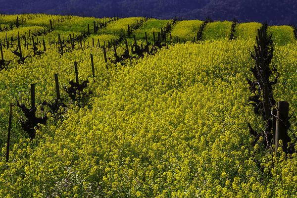 Wall Art - Photograph - Rolling Hills Of Mustard Grass by Garry Gay