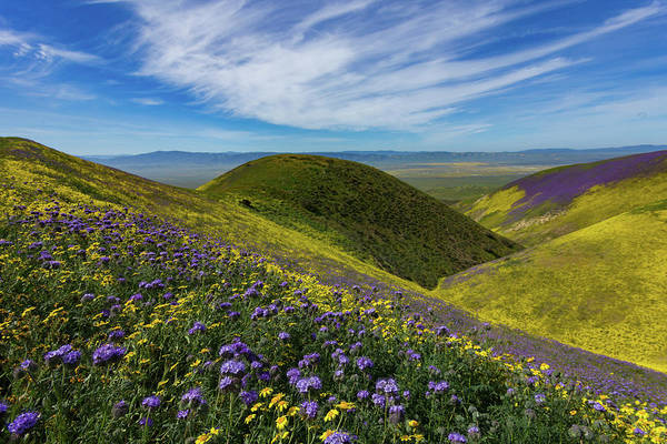 Wall Art - Photograph - Rolling Hills Of Wildflowers - Carrizo Plain National Monument by Bridget Calip