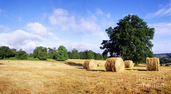 Photograph - Roly-poly Hay Bales In Surrey by Warren Photographic