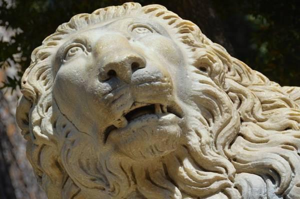 Photograph - Roman Beast by JAMART Photography