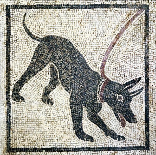 Wall Art - Photograph - Roman Guard Dog Mosaic by Sheila Terry