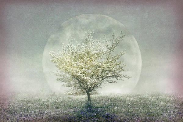 Lavender Mist Wall Art - Photograph - Romance Before Dawn by Debra and Dave Vanderlaan