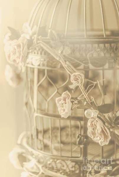 Wall Art - Photograph - Romance In A Captive Entanglement by Jorgo Photography - Wall Art Gallery