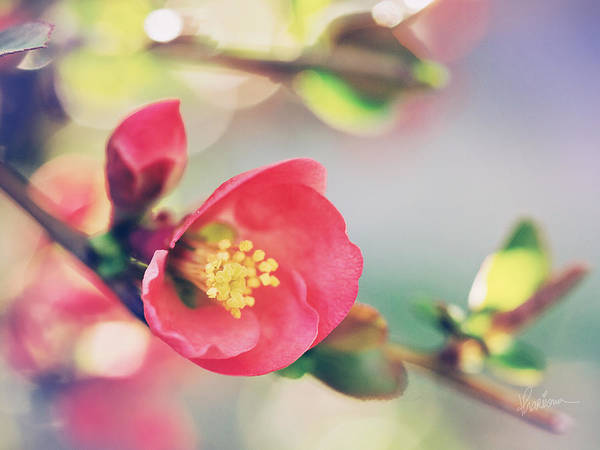 Photograph - Romancing Spring II by Kharisma Sommers