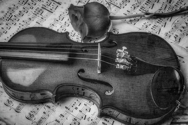Foilage Photograph - Romantic Violin And Rose In Black And White by Garry Gay