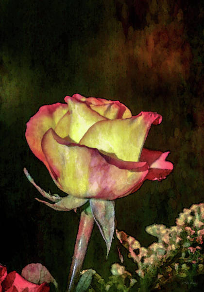 Photograph - Romanticized Rose 7731 Idp_2 by Steven Ward