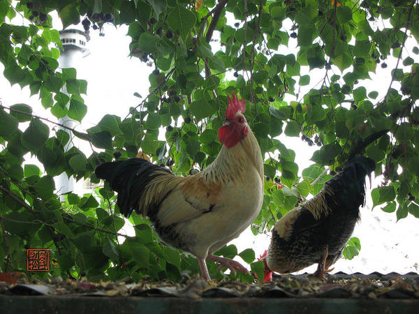Photograph - Rooftop Roosters by Geoffrey Lewis