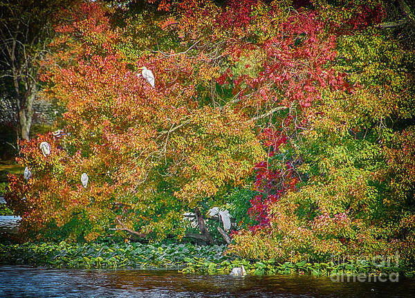 Photograph - Rookery In Autumn by Judy Hall-Folde