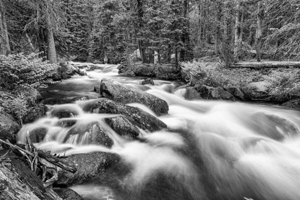 Photograph - Roosevelt National Forest Stream In Black And White  by James BO Insogna