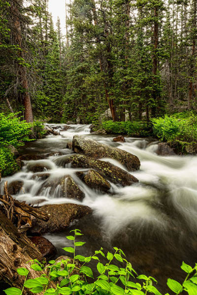 Roosevelt National Forest Photograph - Roosevelt National Forest Stream Portrait by James BO Insogna