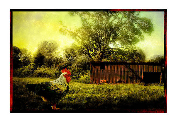 Farmyard Photograph - Rooster by Mal Bray