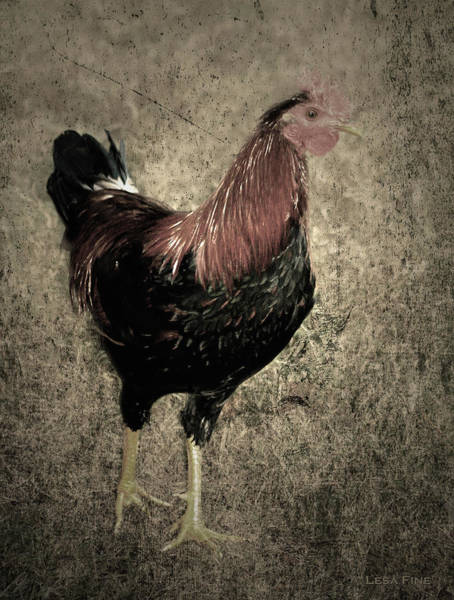 Photograph - Rooster Red Art Textured Vignette by Lesa Fine