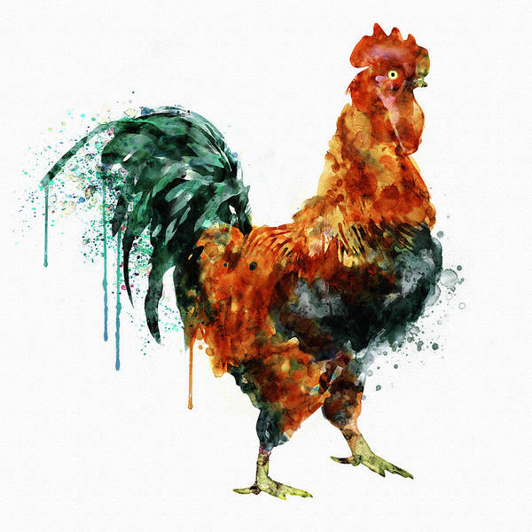 Bird Watercolor Painting - Rooster Watercolor Painting by Marian Voicu