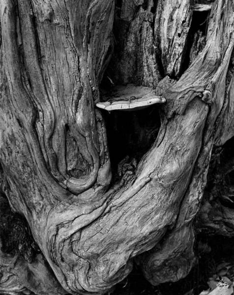 Photograph - Root Form Along The Pemigewasset River by Wayne King