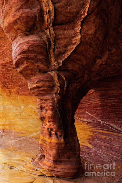 Wall Art - Photograph - Tree Of Stone by Mike Dawson