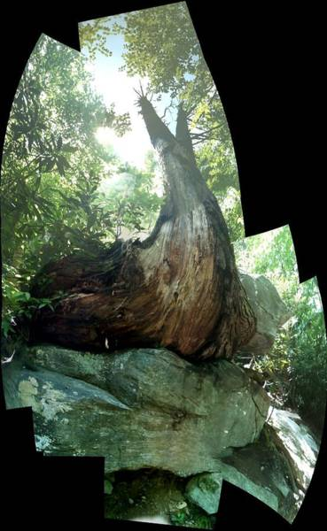 Photograph - Root Over Rock by John Gibbs