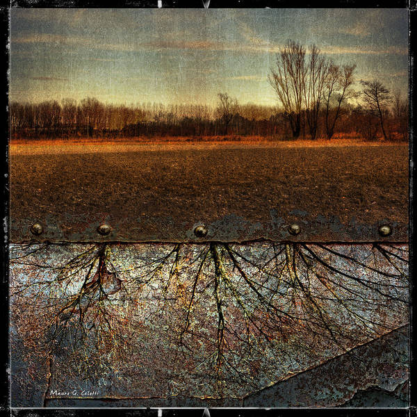 Photograph - Rooted Fields by Mauro Celotti