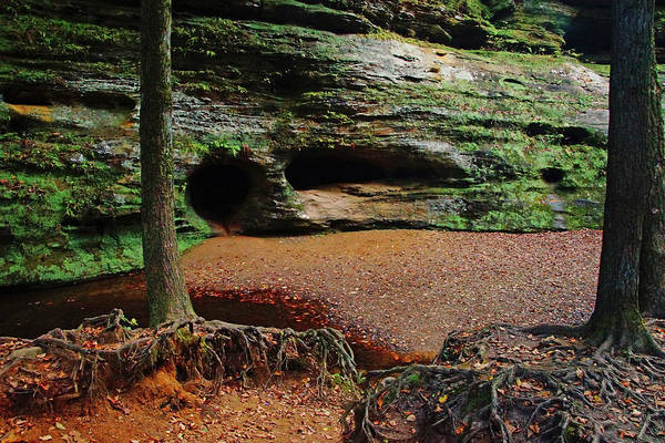 Photograph - Roots And Caves by Mike Murdock