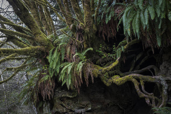 Photograph - Roots And Fern by Robert Potts