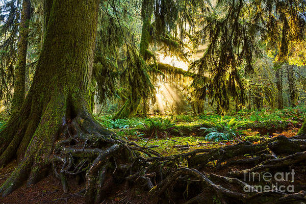 Wall Art - Photograph - Roots And Light by Jamie Pham