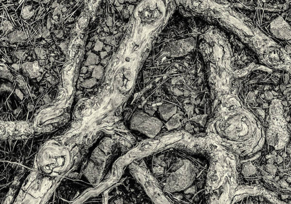 Photograph - Roots And Rocks by John Williams