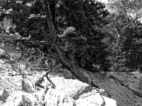 Photograph - Roots And Rocks Photo Bw by David King