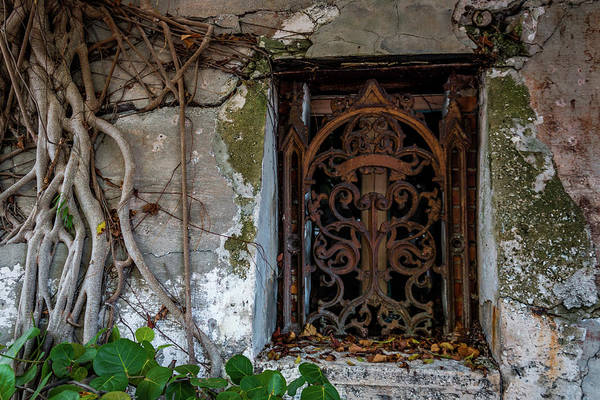 Photograph - Roots And Rust by Susie Weaver