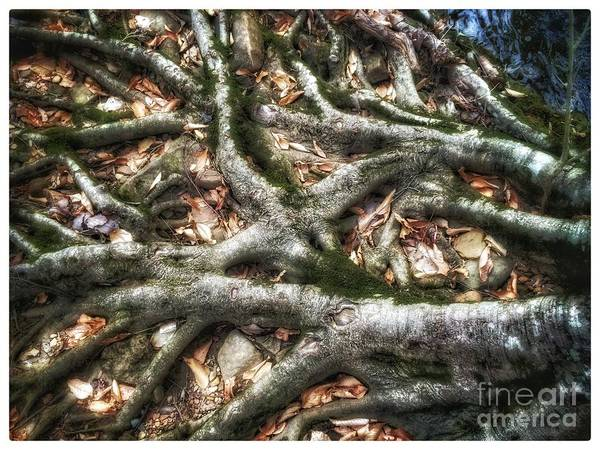 Photograph - Roots by Christine Paris