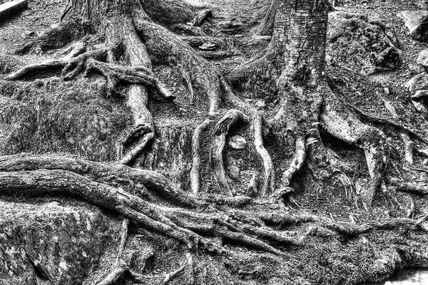 Photograph - Roots by Dawn J Benko