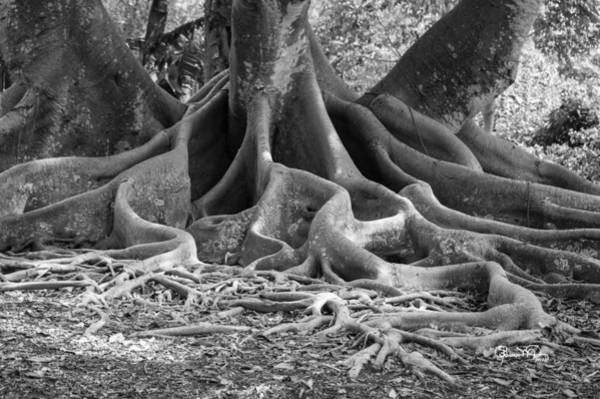 Photograph - Roots Five by Susan Molnar