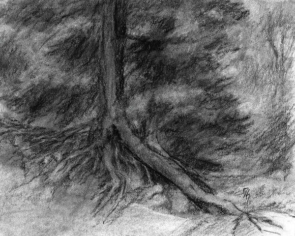 Evergreen Trees Drawing - Roots I by David King