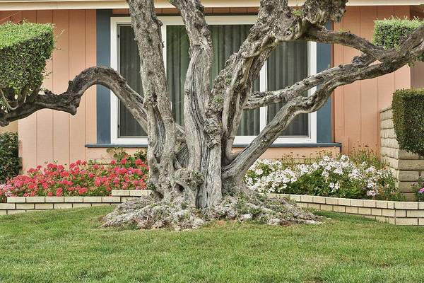 Wall Art - Photograph - Roots I by Linda Brody