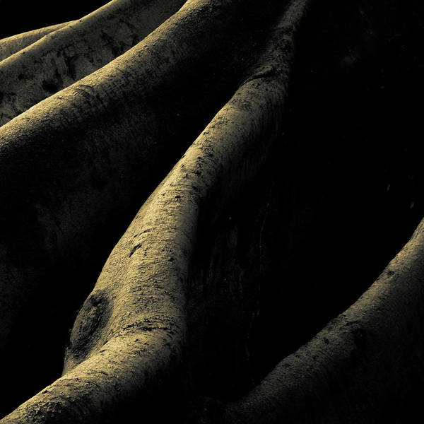 Fig Tree Wall Art - Photograph - Roots In Abstract by Joseph Smith