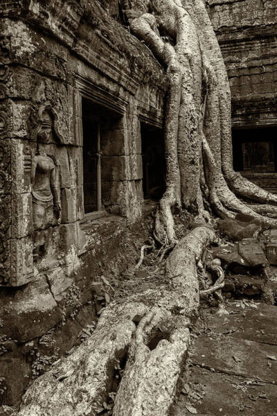 Photograph - Roots In Ruins 4, Ta Prohm, 2014 by Hitendra SINKAR