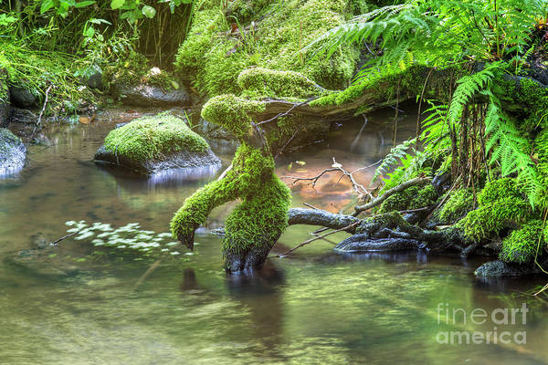 Wall Art - Photograph - Roots In The Brook by Michal Boubin